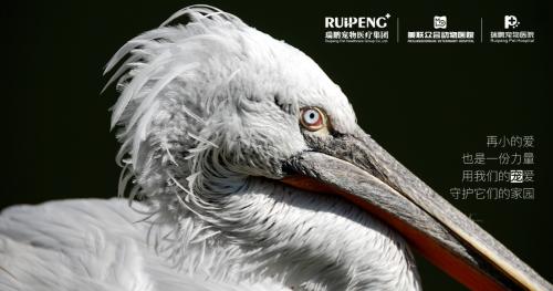 99公益日,瑞鹏宠物医疗集团邀您守护候鸟家园