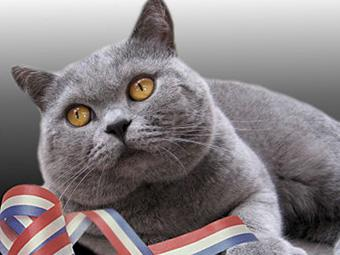 瑞鹏宠物医院带您了解卡尔特猫