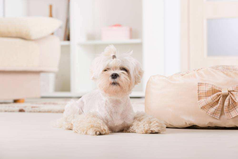 如何选择适合自己的狗狗做宠物