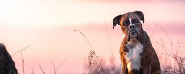 狗狗螨虫怎么去除的简单方法