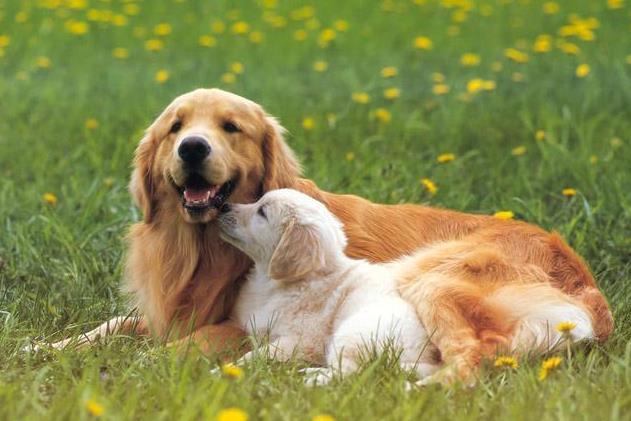 狗狗能吃煮熟的栗子吗