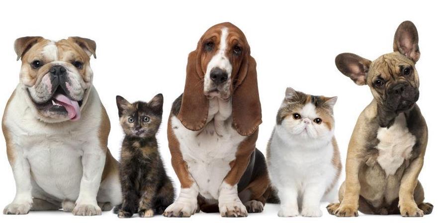 什么狗比较安静