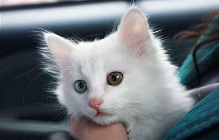 猫为什么要绝育