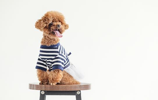 狗能吃阿莫西林消炎吗
