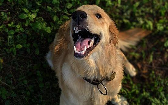狗狗上呼吸道感染是什么原因