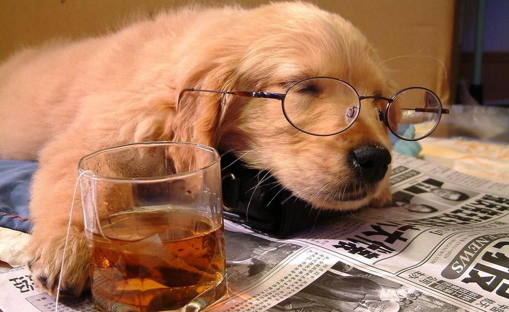 狗喝啤酒有没有事