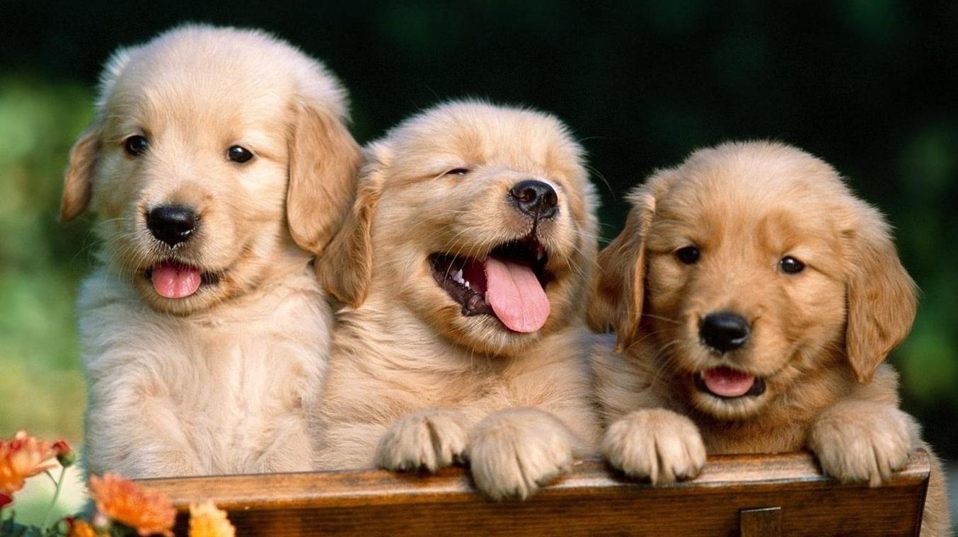狗的品种有多少种