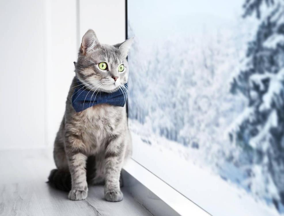 猫抑郁症的治疗方法