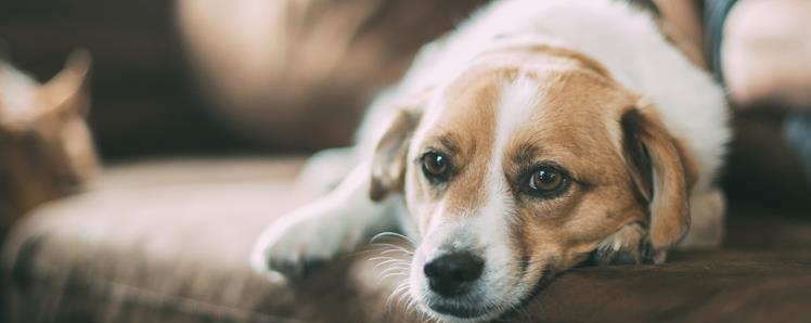 狗狗肠胃炎的症状