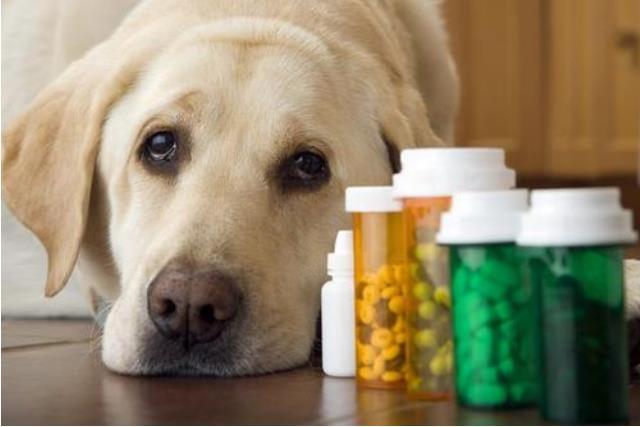 犬瘟热的预防措施