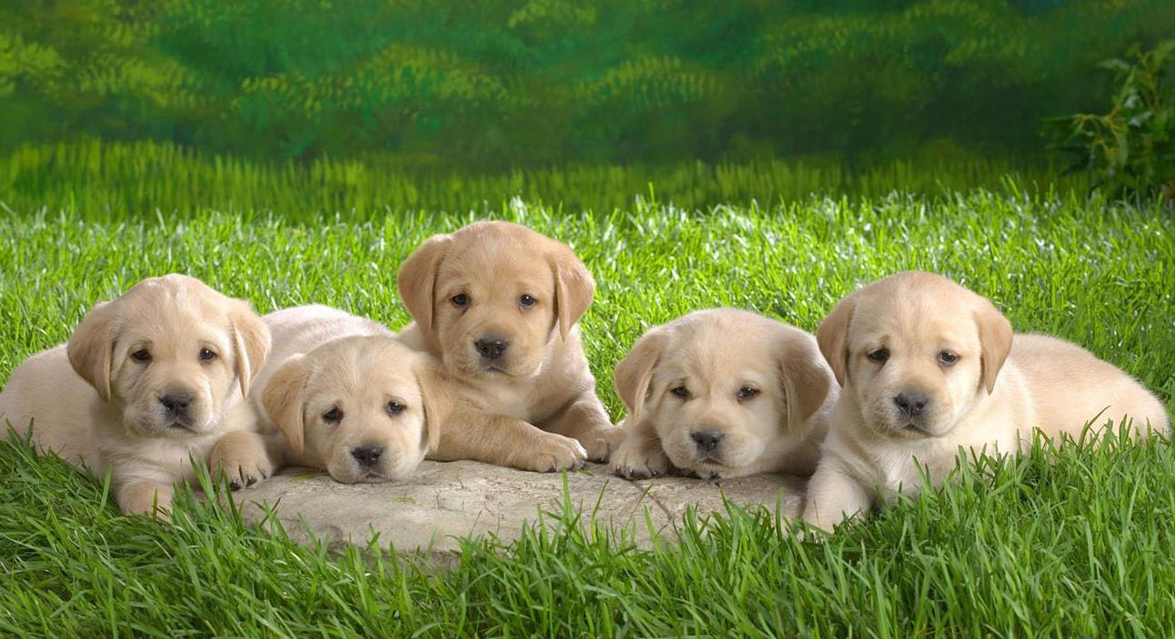 狗狗死亡率高的疾病