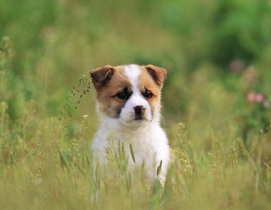 狗狗耳螨会传染给人吗