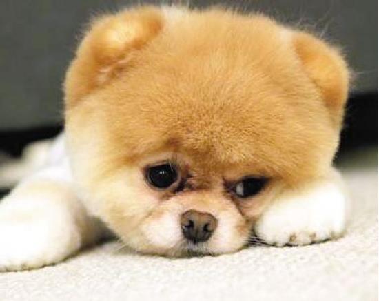 狗狗分离焦虑症的表现