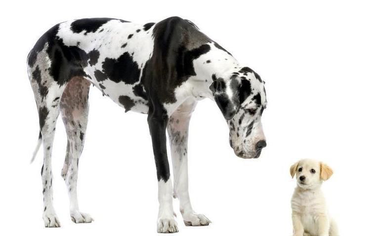 成犬粮和幼犬粮的区别