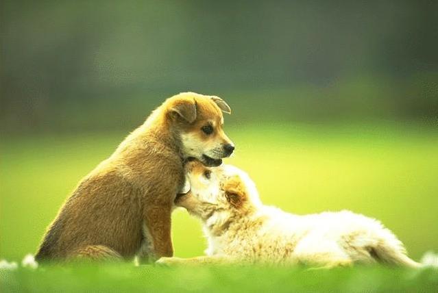 牛磺酸对狗狗的危害
