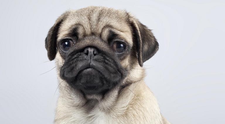 狗狗便血有几种原因怎么处理