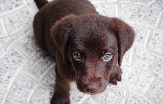 狗狗肠胃炎禁食禁水多久
