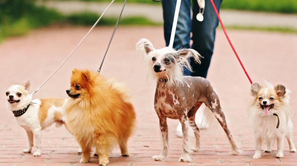 犬冠状症状