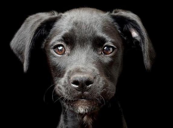 狗狗会吃自己的便便吗