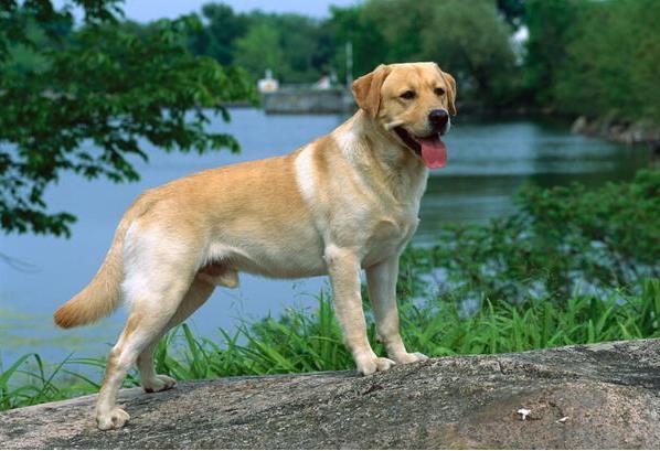 狗中暑的症状有哪些