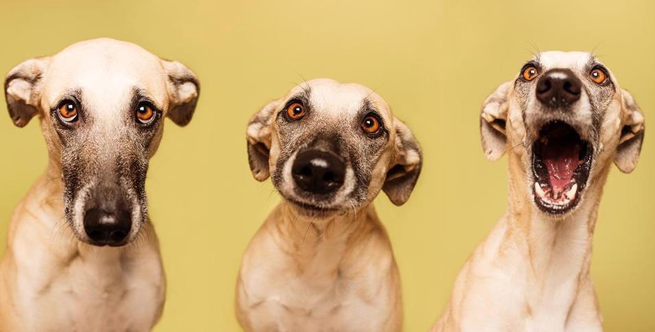 狗贫血的症状是什么