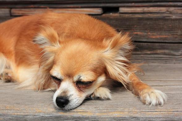 狗狗睡瓷砖有危害吗