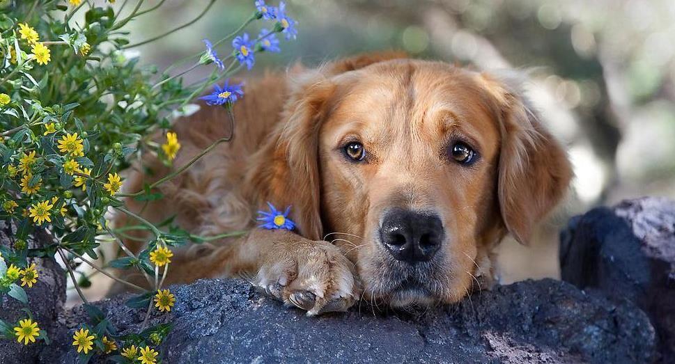 狗不吃药怎么才能喂进去