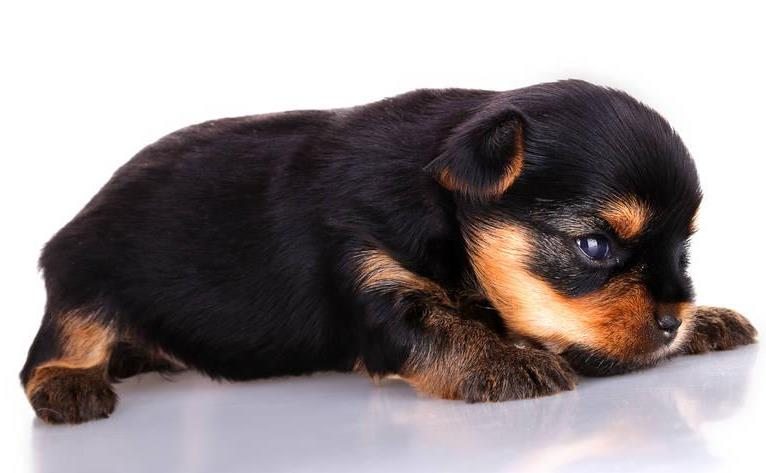 小狗几个月打疫苗