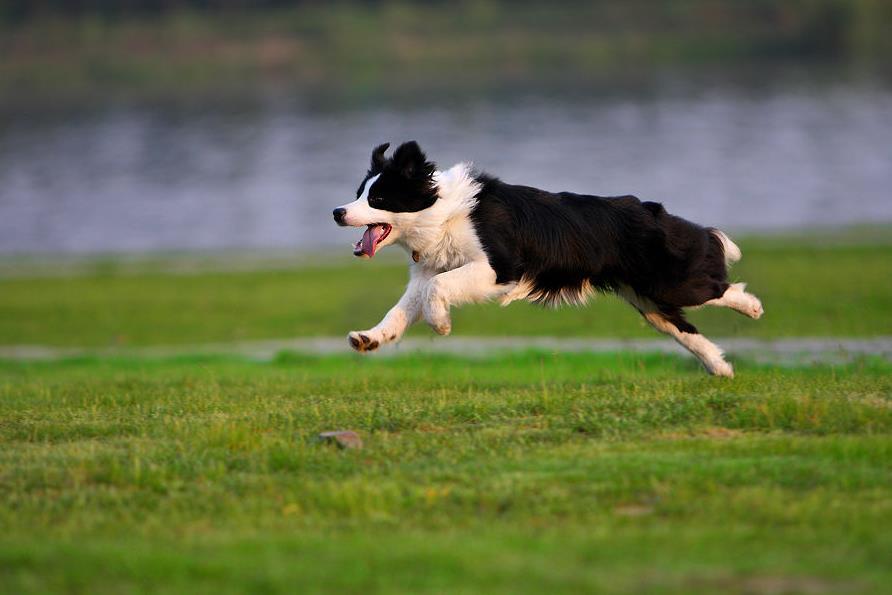 狂犬病的狗有什么症状