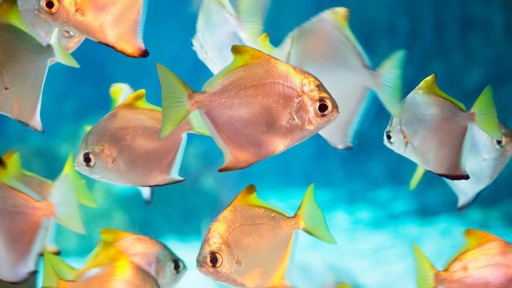 热带鱼换水的正确方法