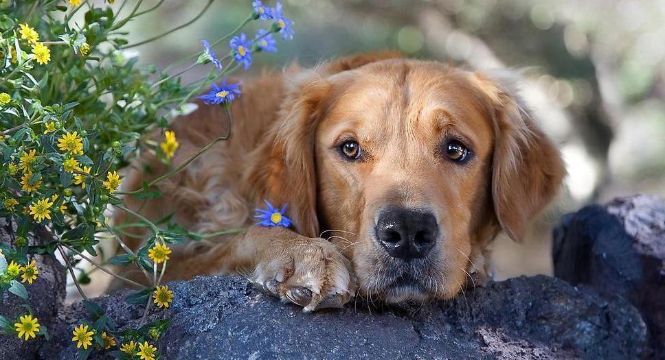 狗狗支气管炎怎么治
