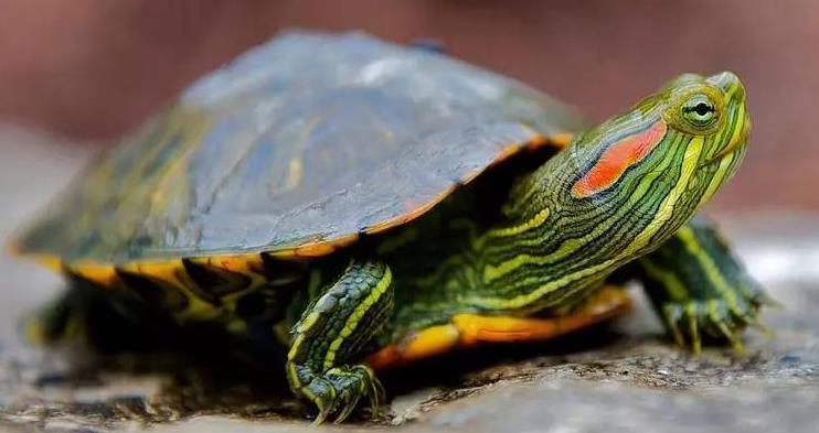 治疗乌龟眼病的方法