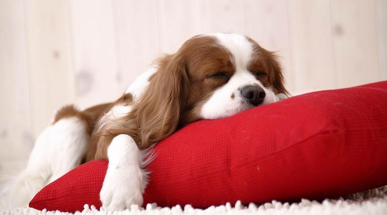 狗狗感染寄生虫的症状
