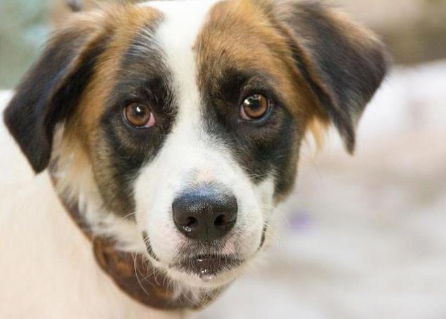 狗狗为什么反感人对它吹气