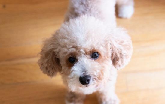 幼犬会有狂犬病毒吗