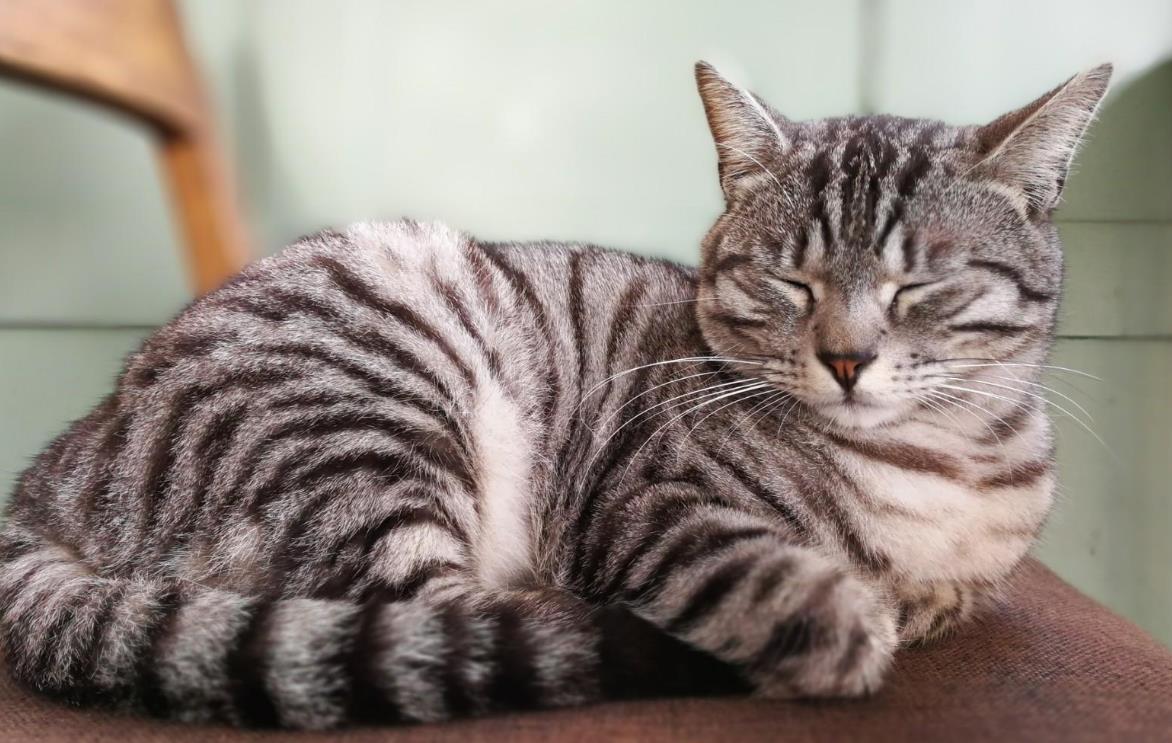 猫疫苗预防哪些病