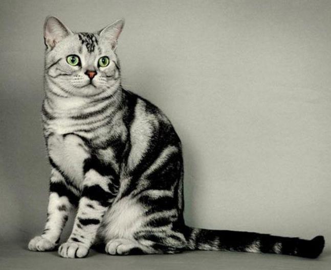 为什么猫天生会抓老鼠