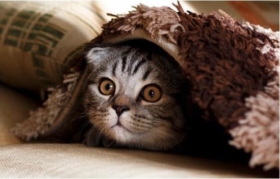一直不出门的猫会有狂犬病吗