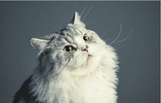 猫疫苗间隔时间