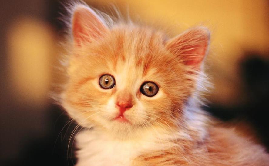 猫咪绝育术前体检要注意什么
