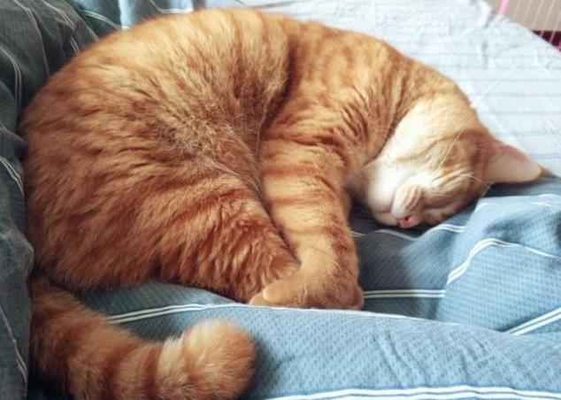 猫咪发情的危害有哪些
