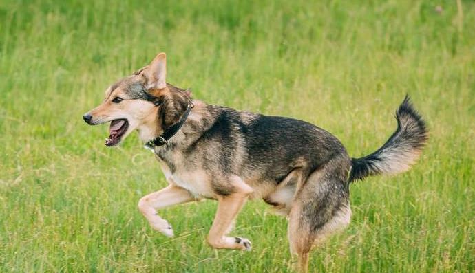 狗狗过敏有哪些临床症状