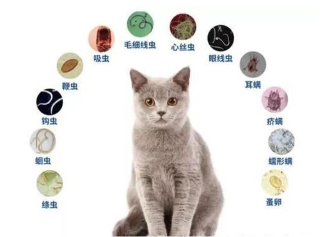 猫咪身上的寄生虫有哪些