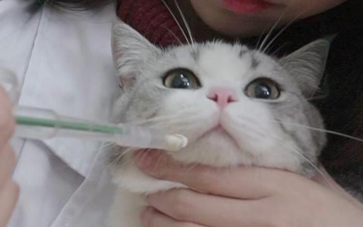 猫咪多久驱虫一次