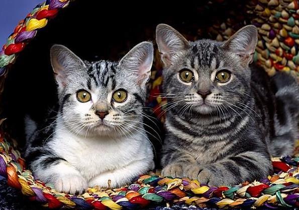 导致猫咪患毛球症是什么原因