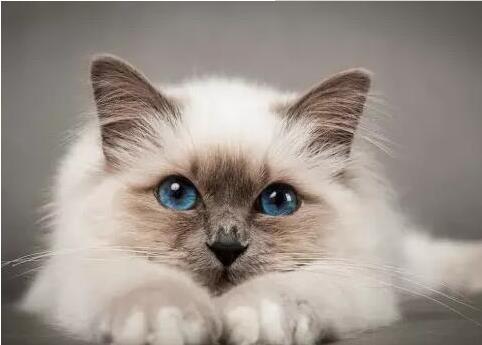 猫咪异常瘙痒的原因有哪些