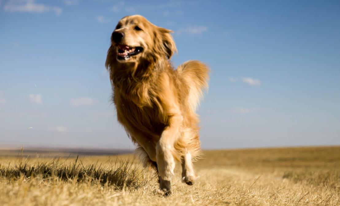 如何预防狗狗腹泻