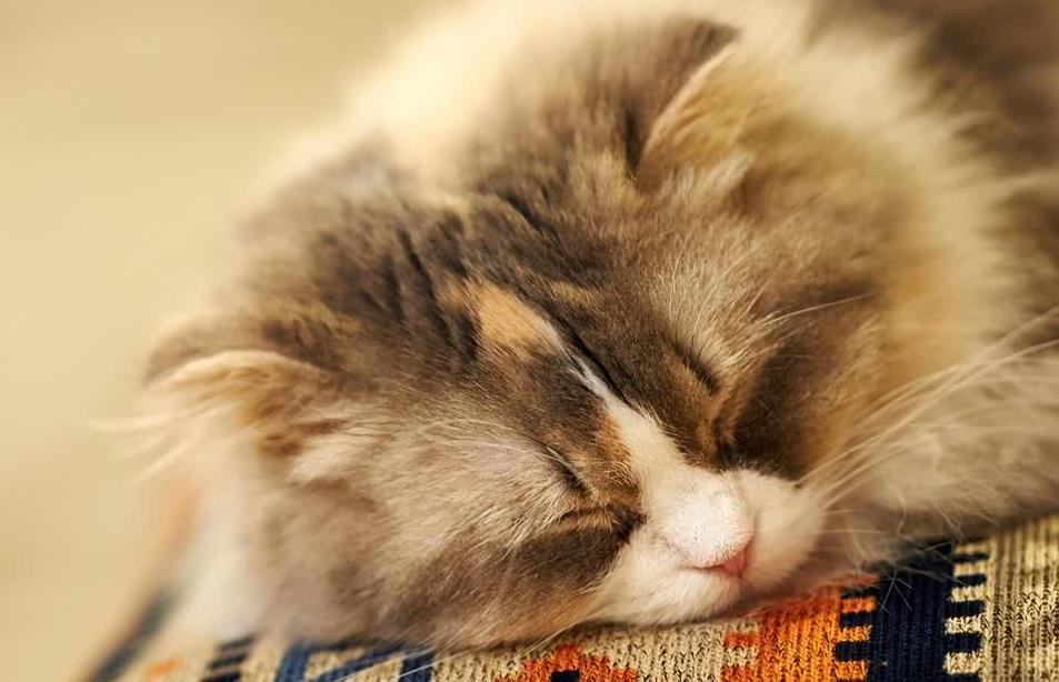 猫咪发烧的症状有哪些