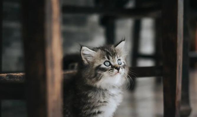 猫咪分离焦虑症怎么办