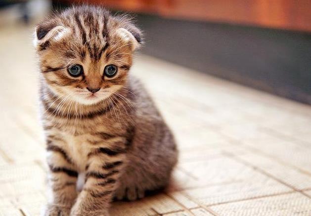 猫咪需要补充哪些维生素